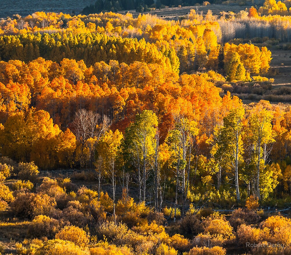 Conway Summit, Mono County, CA by Robert Darby