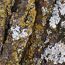 Tree Bark With Lichens by pjwuebker
