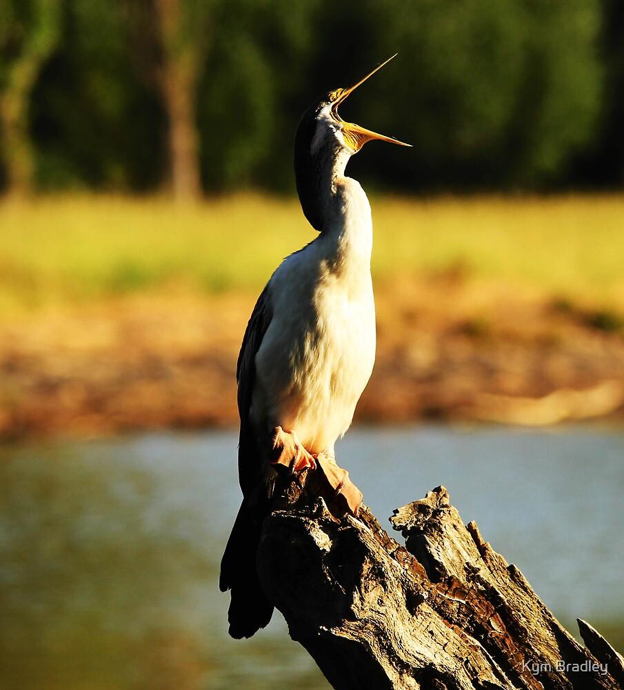 Singing for my Supper ~cormorant~ by Kym Bradley