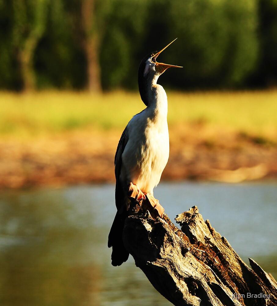 Open Wide Fish Jump In  ~ cormorant ~ by Kym Bradley