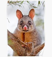 A Brush with a BrushTail Poster