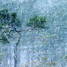 30.11.2012: Pine Tree and Blizzard by Petri Volanen