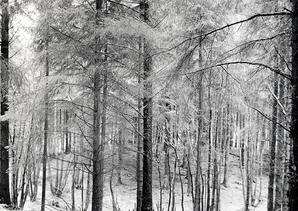 Grizedale Forest 1 by Steven Taylor