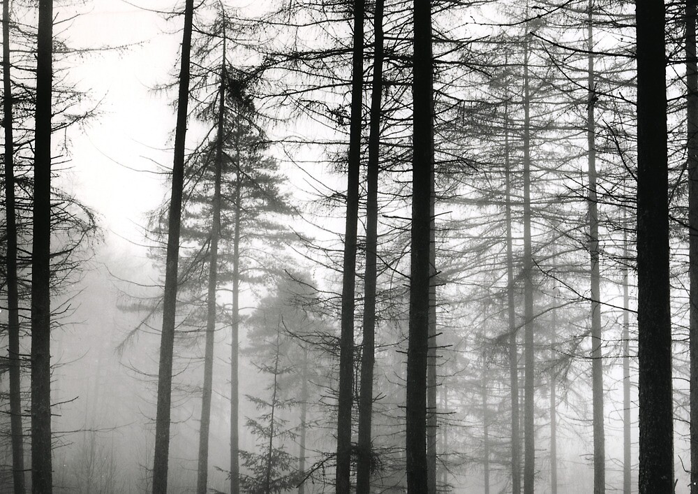 Grizedale Forest 3 by Steven Taylor