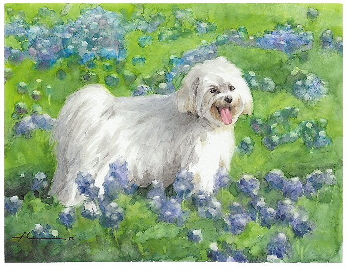 Dog in bluebonnets watercolor by Mike Theuer