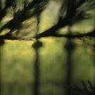 DREAMING IN GREEN II by June Ferrol