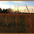 Acadiana Sunset by Doug Bonner