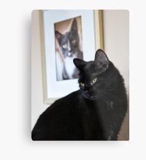 Cat Picture Metal Print