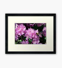 Spring Bee & Azalea Blossoms Framed Print
