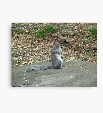 Do It Gangnam Style - Gray Squirrel goes Korean Canvas Print