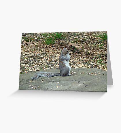 Do It Gangnam Style - Gray Squirrel goes Korean Greeting Card
