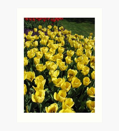Glowing Golden Tulips in the Garden of Europe Kunstdruck