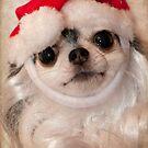 Santa Paws by TeresaB