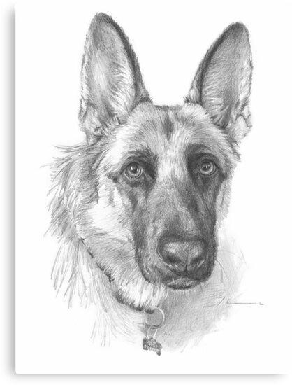 German Shepherd Drawing Canvas Prints By Mike Theuer Redbubble - German-shepherd-drawings