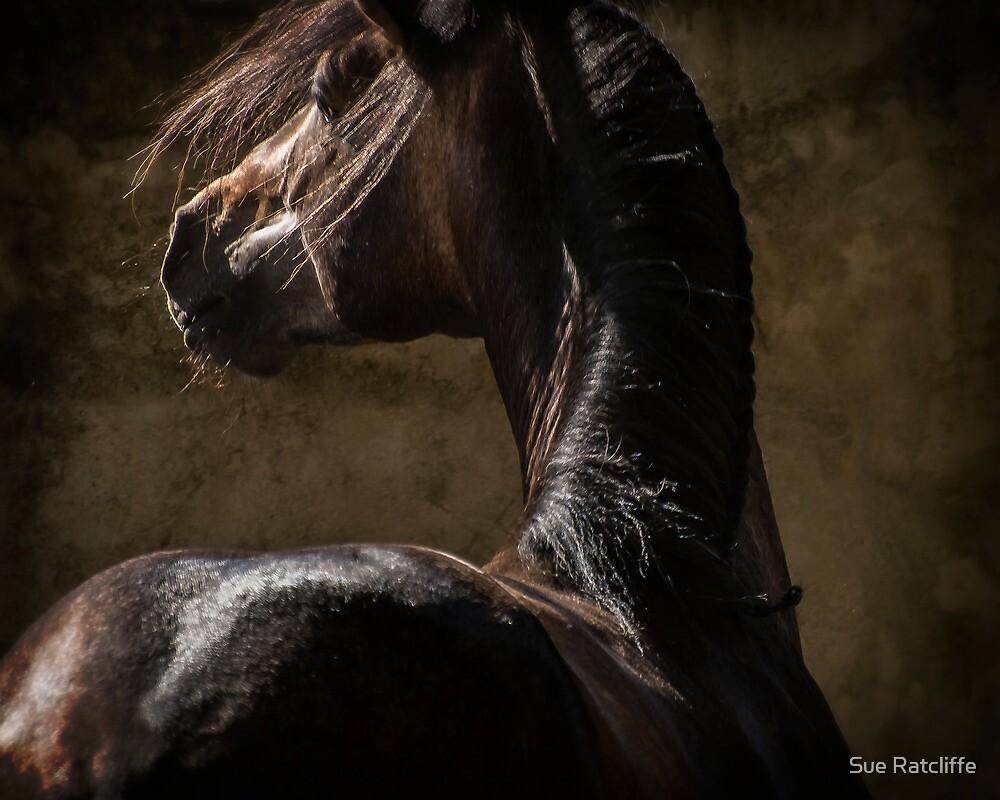 Spanish PRE Stallion by Sue Ratcliffe