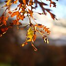 Autumn...  by Pippa Carvell