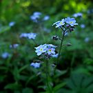 Forget Me Not by Cow41087