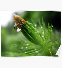 Pine & Water Poster