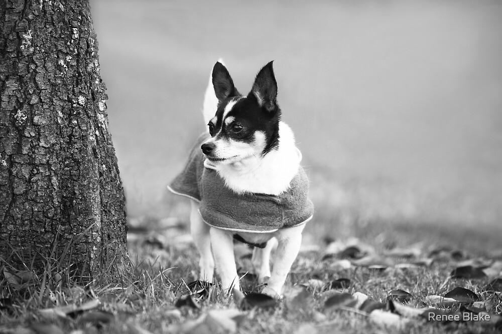 Winter Coat Weather~ by Renee Blake