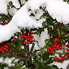 Holly and Snow by darkskywv