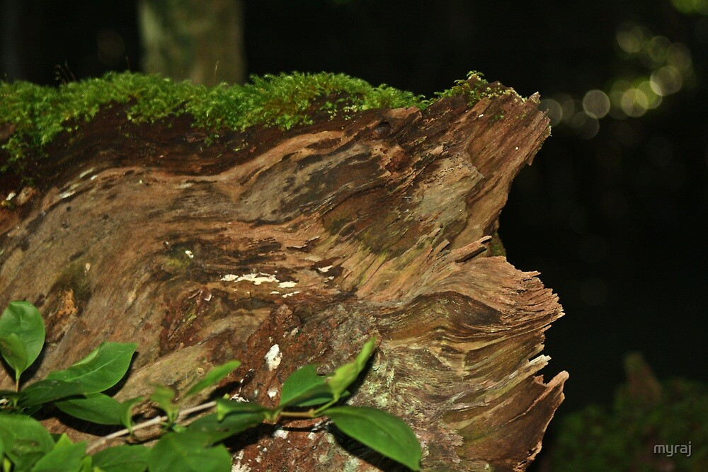 Stumped with Moss by myraj