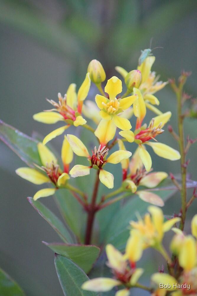 Thryallis Bouquet by Bob Hardy
