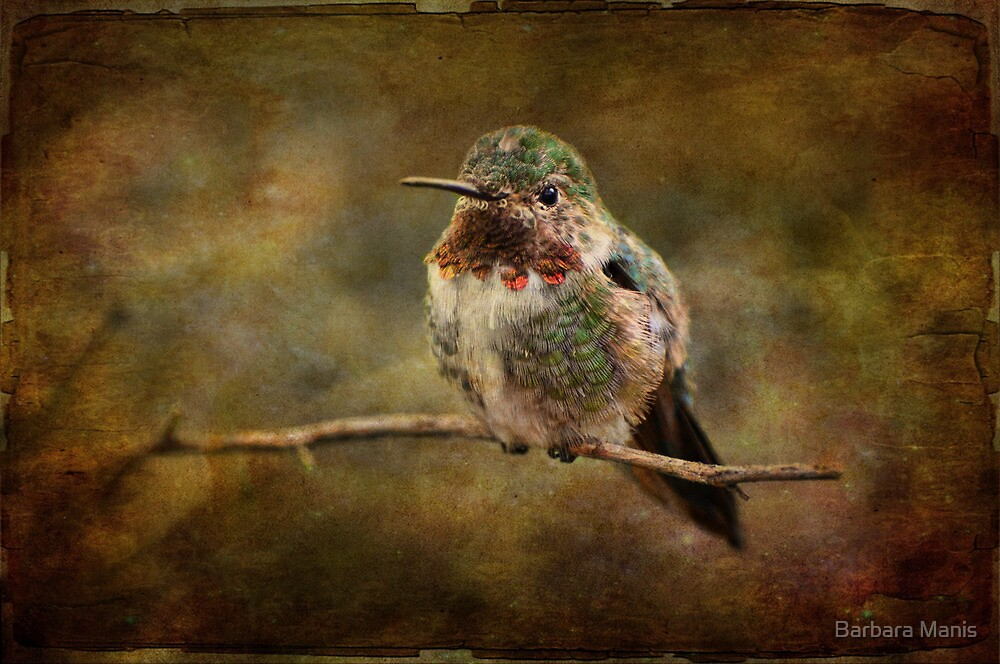 Beautiful Bird by Barbara Manis