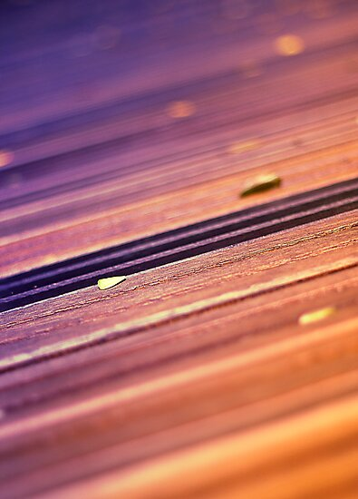 Wooden Path by Susan Tong