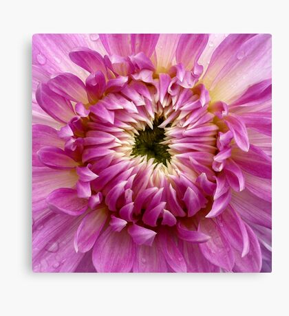 So Close (available in ipad case) Canvas Print