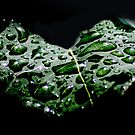 Drops Of Love  by JerryCordeiro