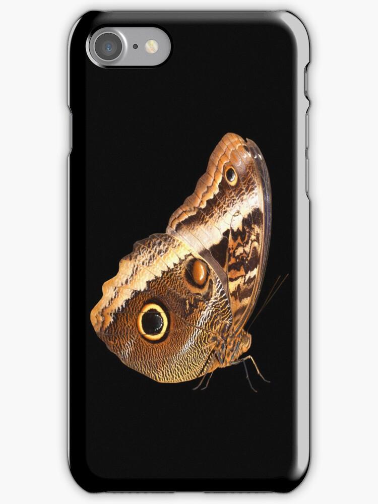 Owl Butterfly by neil harrison