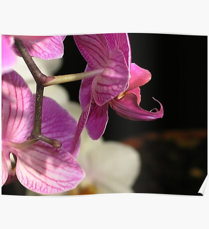 Orchid #1 Poster