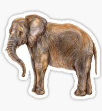Illustration of african elefant Sticker