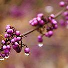 Purple Beautyberries by Tracy Friesen
