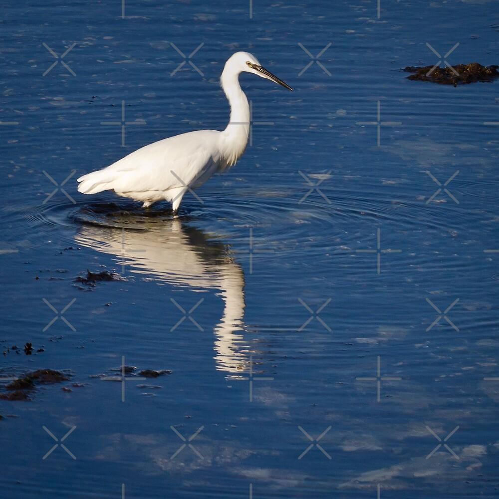 Little Egret by Geoff Carpenter