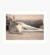 Kangaroo Lazing Art Print