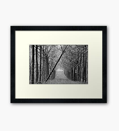 arranged -one Framed Print