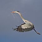 011712 Great Blue Heron by Marvin Collins