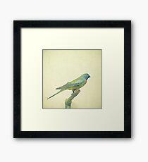Bird Study #3 Framed Print