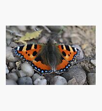 Fiery blue butterfly  Photographic Print