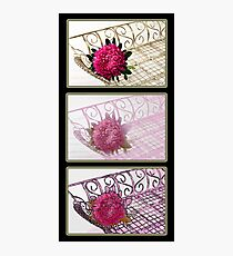 Three Trays Aster Collage  Photographic Print