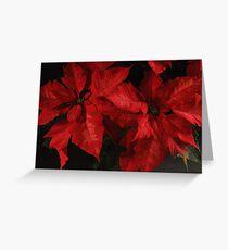 Rich Reds Poinsettias Greeting Card