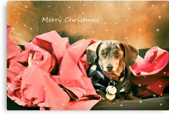 Merry Christmas by Barbara Manis