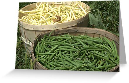 Freshly Picked Beans  by Rich Fletcher