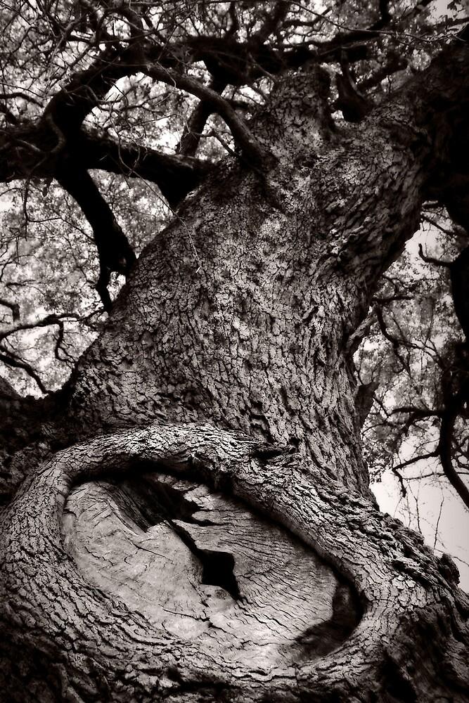 Lightning Tree by Trish Mistric