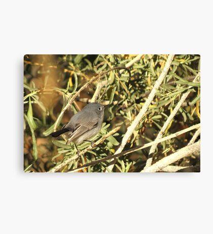 Blue-gray Gnatcatcher (Female) Canvas Print