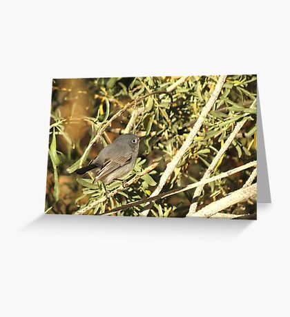 Blue-gray Gnatcatcher (Female) Greeting Card