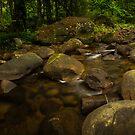 Macquarie Rivulet  by Kerrod Sulter