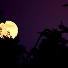 Halloween Moon by amandafaith