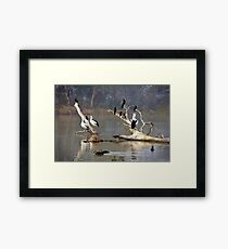 Riverine roost Framed Print